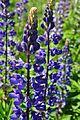 Evans Creek Preserve - 024 - flowers (27291930632).jpg