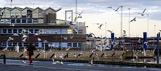Bird feeding - Feeding of seabirds in a harbor.