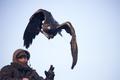 Falconry eagles hares Scotland 02.png