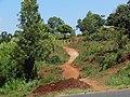 Farm path.jpg