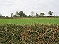 Farmland near Mossley Well Farm - geograph.org.uk - 588352.jpg