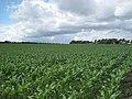 Farmland off Dopers Lane - geograph.org.uk - 1388457.jpg