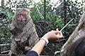 Feeding Monkey in the cage.jpg