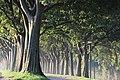 Ferrara, woods around the ancient walls.jpg