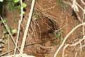 Field Trip Marottichal after Kerala Flood 2018 Soil Piping IMG 9102.jpg
