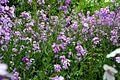 Fieldflowers - West Virginia - ForestWander.jpg