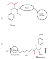 Figure2-2- Gd based contrast agent.png