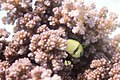 Fish Family (226275555).jpeg