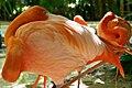 Flamingos At Xcaret Park (20510395).jpeg