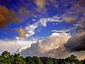 Flickr - Nicholas T - Treeline.jpg