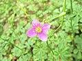 Flora Forest 03.jpg