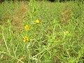 Flora della Riserva Naturale Valle dell'Aniene 2.JPG