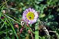 Flower (1084670382).jpg