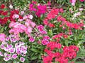 Flower garden unknown plant 2.jpg