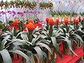 Flowermarket9.jpg