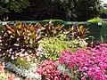 Flowers, Botanic Gardens, Churchtown.JPG