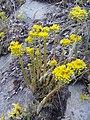 Flowers - Fiori (19146325868).jpg