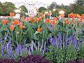 Flowers in Civic Center Denver-3.jpg