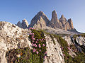 Flowers of the Dolomites.jpg