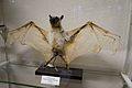 Flying Fox (6915986059).jpg