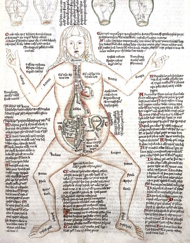 title: diagram of a pregnant woman, with fetus and diseases