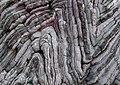 Folding of alternate layers of limestone layers with chert layers.jpg