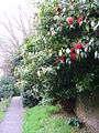 Footpath at Sedlescombe Church - geograph.org.uk - 340119.jpg