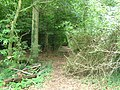 Footpath in the Forest - geograph.org.uk - 1427802.jpg