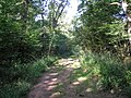 Footpath through Newtye Hurst, Kent - geograph.org.uk - 194288.jpg