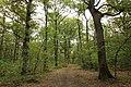 Forêt Départementale de Méridon à Chevreuse le 29 septembre 2017 - 35.jpg
