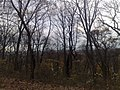 Forest Park, Queens, NY, USA - panoramio (5).jpg
