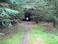 Forest footpath - geograph.org.uk - 430581.jpg