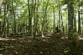 Forest in Doshi 04.jpg