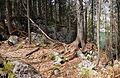 Forest near Black Lake.jpg