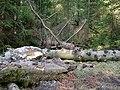 Forest near the Große Bode 03.jpg