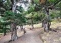 Forest path to Milerepa Cave - Annapurna Circuit, Nepal - panoramio.jpg