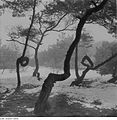 Fotothek df ps 0002098 Bäume.jpg
