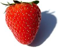 Fragaria Fruit Close-up