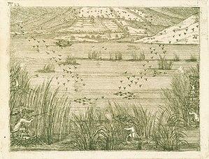 Waterfowl hunting - Wikipedia