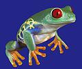 Froggies-1.jpg
