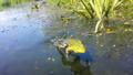 Froschsprung - Nationalpark Unteres Odertal.png