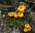 Fungi on tree trunk.jpg