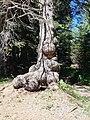 Furx-weather spruce-02ESD.jpg