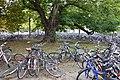 Göttingen Train Station Bike Parking.jpg