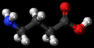 <i>gamma</i>-Aminobutyric acid Main inhibitory neurotransmitter in the mammalian brain