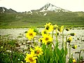 GB Deosai National Park -5.jpg