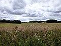 GOC Letchworth 038 Countryside (40312311575).jpg