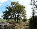 Gabillou chemin nord Vaudres (1).jpg