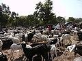 Gambia01SouthGambia061 (5380654084).jpg