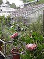 Gardener in Botanical Garden - Giessen - Germany.jpg